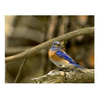 Carte Postale Les Etats-Unis, Washington, Yakima. Oiseau bleu