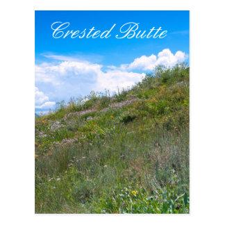 Carte Postale Les fleurs sauvages sur des collines s'approchent