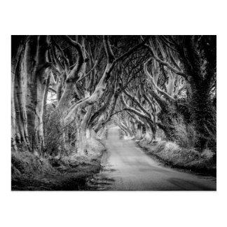 Carte Postale Les haies d'obscurité dans Black&White