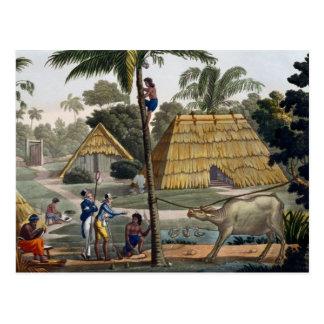 Carte Postale Les indigènes de question de naturalistes