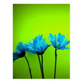 Carte Postale Les marguerites turquoises de turquoise sur le