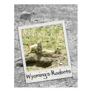 Carte Postale Les rongeurs du Wyoming de chien de prairie -