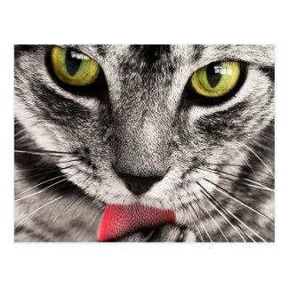 Carte Postale les yeux félins et la langue de beau chat lèchent