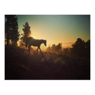 Carte Postale Lever de soleil au Montana