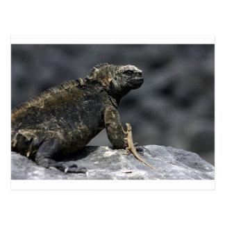 Carte Postale Lézard Galapagos d'iguane marin et de lave