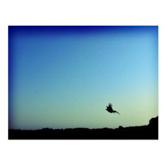 Carte Postale Libérez comme oiseau