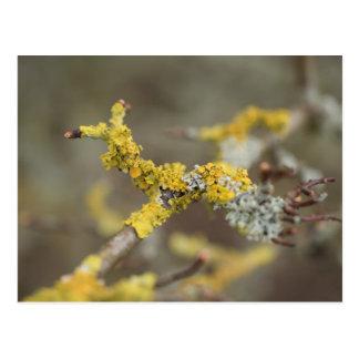 Carte Postale Lichens