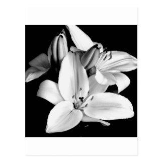 Carte Postale lily-flower-in-black-and-white-kimxa-stark.jpg