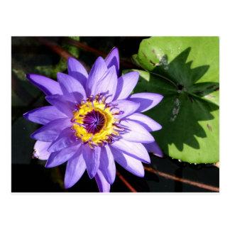 Carte Postale Lilypad pourpre et fleur