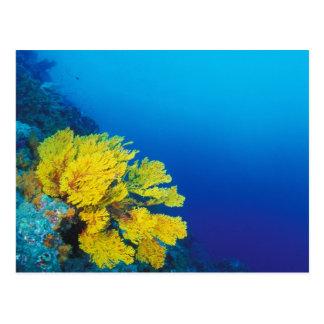 Carte Postale L'Indonésie, îles de Banda, récifs coraliens