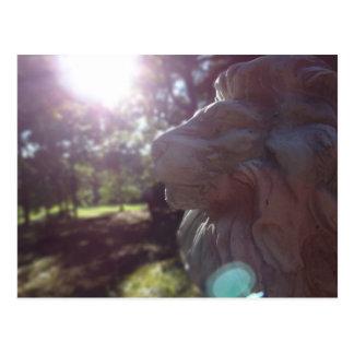 Carte Postale Lion de soleil