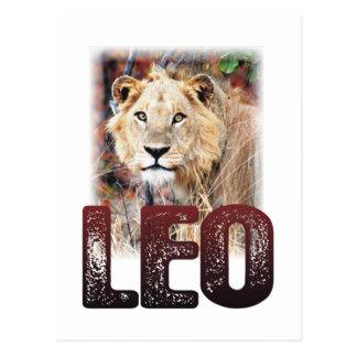 Carte Postale Lion ou lion africain, un chat félin sauvage et