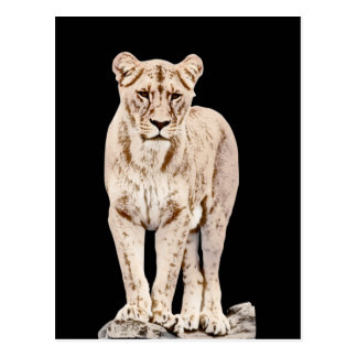 Carte Postale Lionne majestueuse