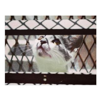 Carte Postale Little cat photography EMEICEA