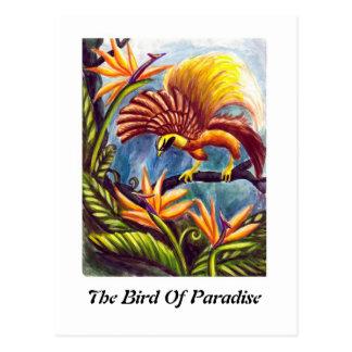 Carte Postale L'oiseau du paradis