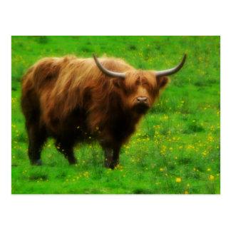 Carte Postale Longhorn à cheveux longs avec de longs klaxons