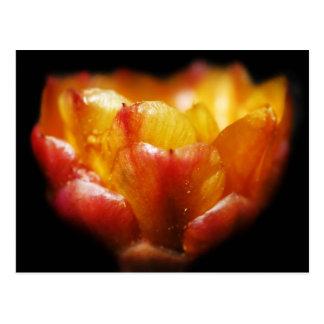 Carte Postale Lueur de cactus