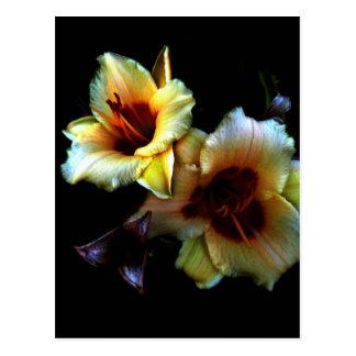 Carte Postale Lueur jaune de lis