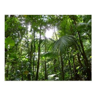 Carte Postale Lumière du soleil par le vert tropical d'auvent de