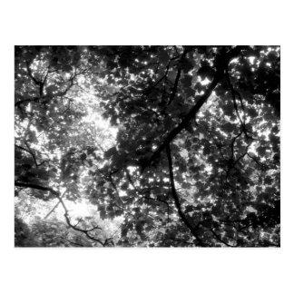 Carte Postale Lumière par les arbres