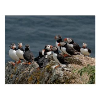 Carte Postale Macareux d'île de Skomer