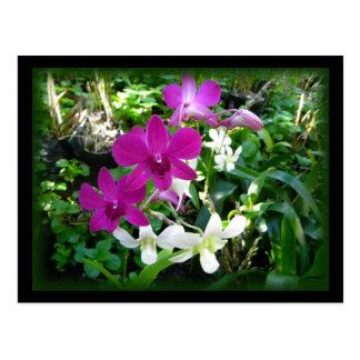 Carte postale magenta d'orchidées