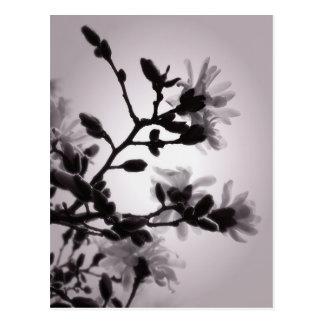Carte Postale Magnolia de ressort