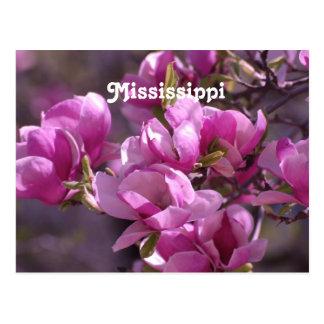 Carte Postale Magnolias