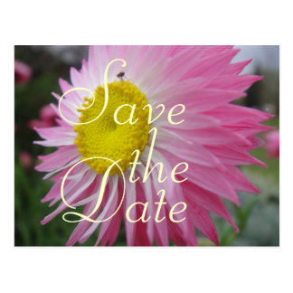 Carte Postale Marguerite de papier rose