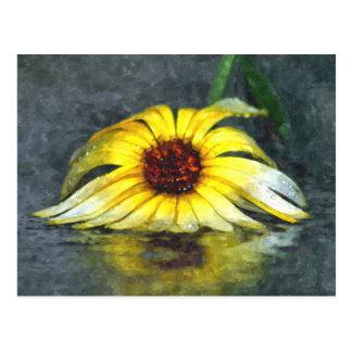 Carte Postale Marguerite jaune sous la pluie