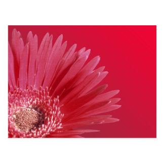 Carte Postale Marguerite rouge quarte