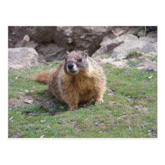 Carte Postale Marmot