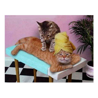 Carte Postale Massage drôle de chat