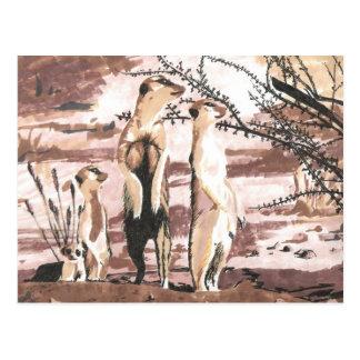 Carte Postale Meerkats