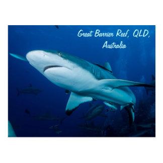 Carte Postale Mer de corail de la Grande barrière de corail de