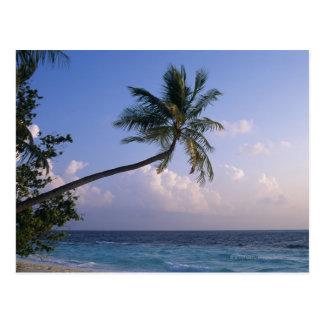 Carte Postale Mer et palmier