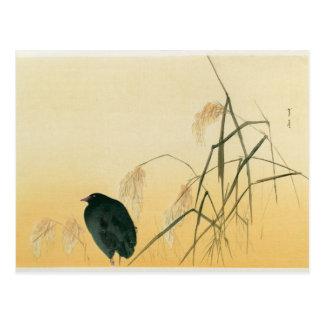Carte Postale Merle, période d'Edo