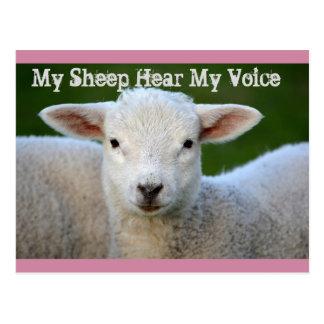 Carte Postale Mes moutons entendent ma voix, 10h27 de John de