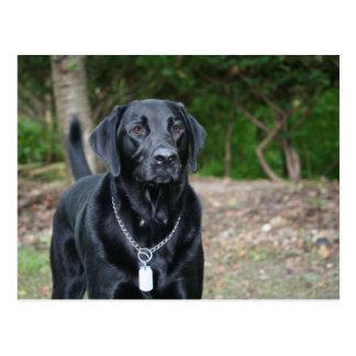 Carte Postale Mesure - Labrador noir