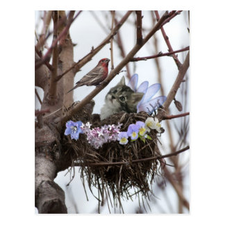 Carte postale mignonne de Pâques de nid de chaton