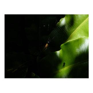 Carte postale minuscule d'araignée