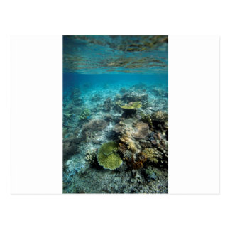 Carte Postale Monde sous-marin de récif coralien d'îles d'Ampat