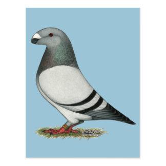 Carte Postale Montrez à coureur le pigeon bleu de barre