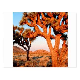 Carte Postale Monument la Californie d'arbre de Joshua de lever
