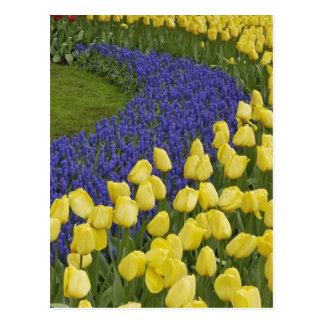 Carte Postale Motif de jardin des fleurs de jacinthe de raisin