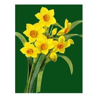 Carte Postale Narcisse (N Tazetta)