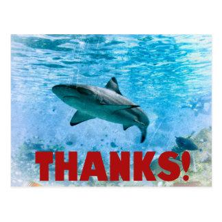 Carte postale nautique vintage de Merci de requin