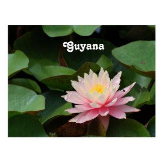 Carte Postale Nénuphar de la Guyane