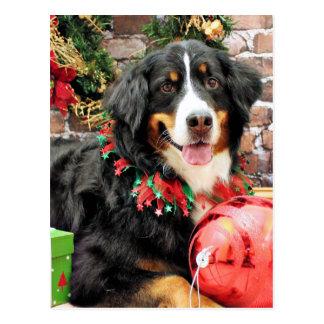 Carte Postale Noël - chien de montagne de Bernese - Chloe