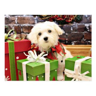 Carte Postale Noël - maltais - éclair